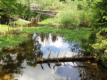 Naturschutzgebiet