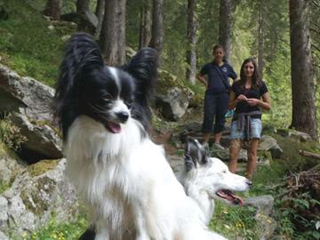 Hunde-wandern