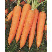 фото Unigen Seeds Морковь Курода Шантане ранняя (Италия) (Курода Шантане Морковь ранняя UG, 500 г)