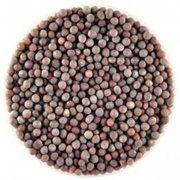 фото Горчица черная, зерно (вес 50г)