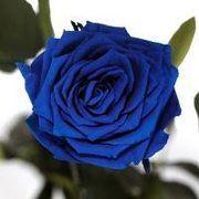 фото Florich синий сапфир (5 карат на коротком стебле)3 шт