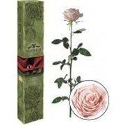 фото Florich Розовый жемчуг (7 карат на коротком стебле) (1117-PK01)