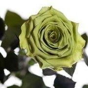 фото Florich лаймовый нефрит (7 карат на коротком стебле)3 шт