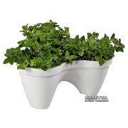 фото Keter Горшок для цветов Ivy Planter Бело-Зеленый (7290103661380)