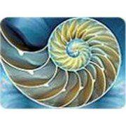 фото RS Office Защитный коврик 90х120 см для ковровых покрытий рисунок Улитка (М2-8919)