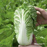 фото Bejo Семена пекинской капусты Маноко F1 2500 шт. (100103)