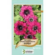 фото Cerny Петуния гибридная превосходнейшая Бордо (Petunia hybrida superbissima) 100 шт (А
