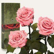 фото Florich Три долгосвежих розы Розовый Кварц в подарочной упаковке (228-1841231)