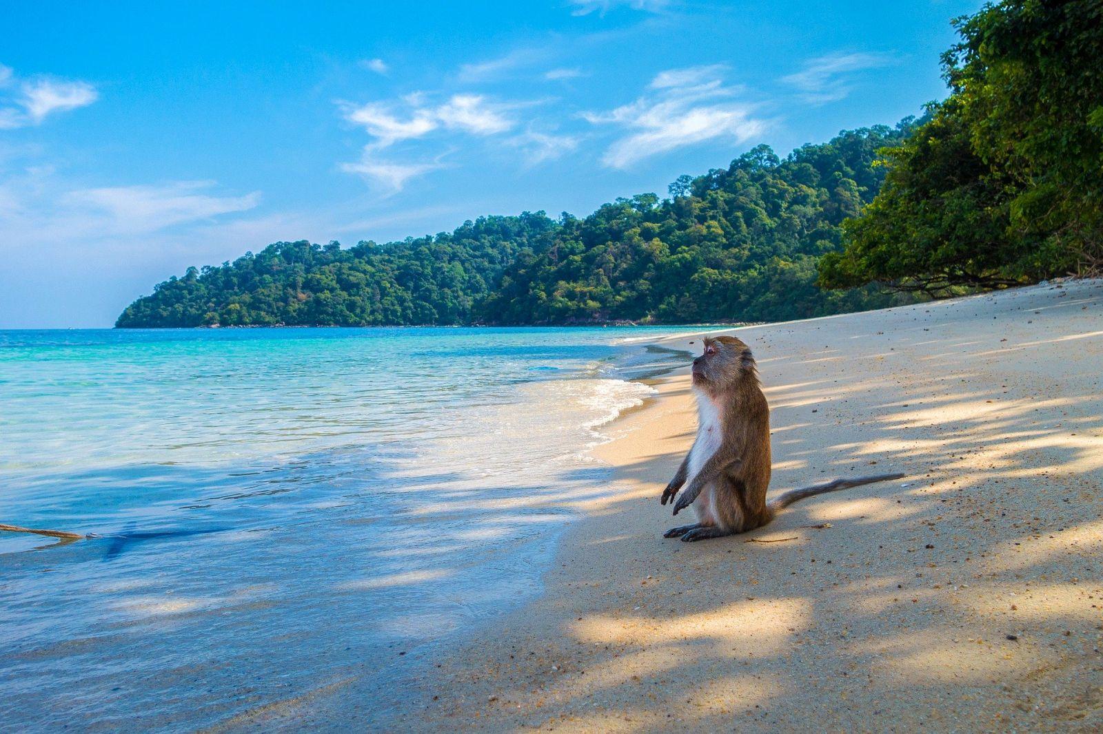 Wildlife Thailand