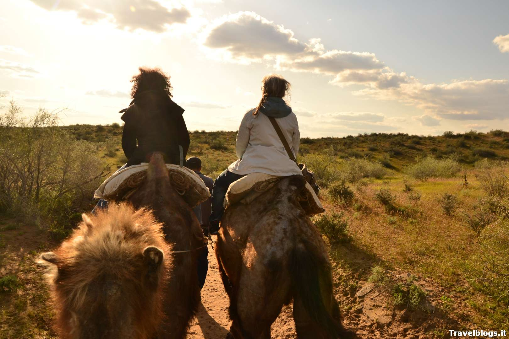 Cammelli in campo Yurta, Uzbekistan