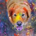 Что такое Холи? Состав и характеристики краски