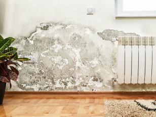 Плесень и грибок в квартире. Как эффективно от них избавиться?