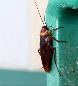 Защита от насекомых и грызунов - Tricolor