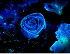 Краска светящаяся AcmeLight для цветов синяя 20мл