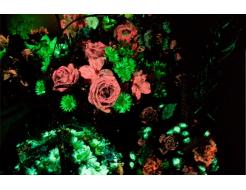 Набор люминесцентных красок для цветов AcmeLight 8 шт