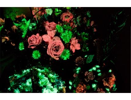 Набор светящихся красок для цветов AcmeLight 8 шт - интернет-магазин tricolor.com.ua