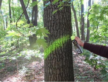 Флуоресцентная аэрозольная краска для маркировки леса Biodur Forest Marking Spray (зеленая) - изображение 2 - интернет-магазин tricolor.com.ua