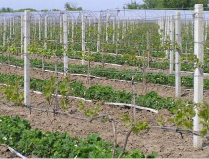 Форма столба  Виноградный столб 2,4 м АБС MF - изображение 2 - интернет-магазин tricolor.com.ua
