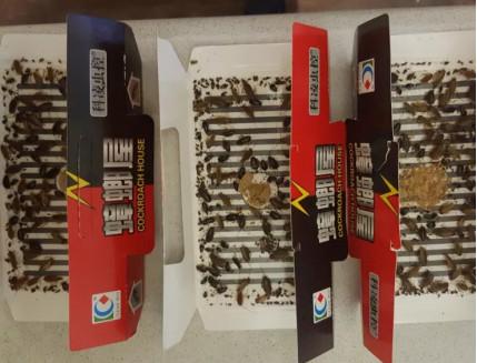 Ловушка для тараканов, прусаков и муравьев повышенной клейкости Killing Bait - изображение 9 - интернет-магазин tricolor.com.ua