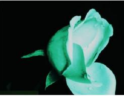 Краска светящаяся AcmeLight для цветов белая - интернет-магазин tricolor.com.ua