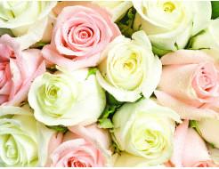 Фотообои Lux Design #2 Розы бело-розовые - интернет-магазин tricolor.com.ua