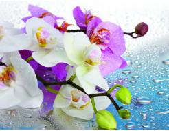 Фотообои Lux Design #17 Цветы и роса - интернет-магазин tricolor.com.ua