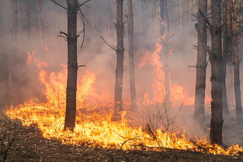 Development forest fire