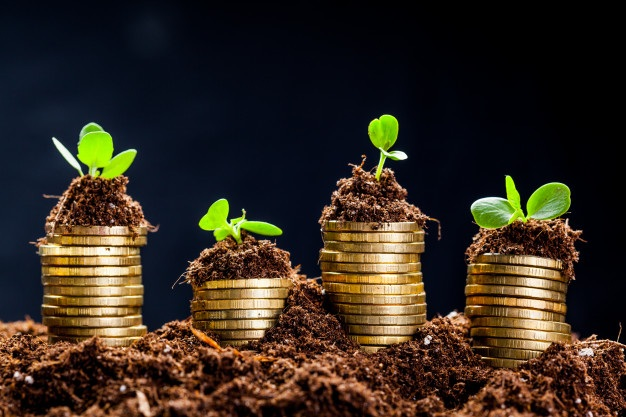 Golden coins soil with young plant money growth concept 93675 58104