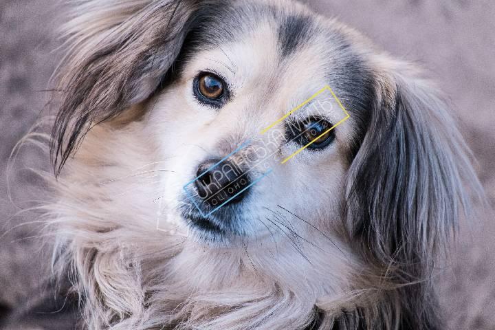 http://uamoment.com/gallery/Dog-815 photo