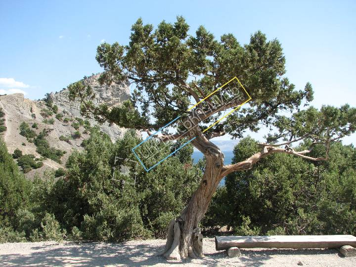 http://uamoment.com/gallery/Tree-235 photo