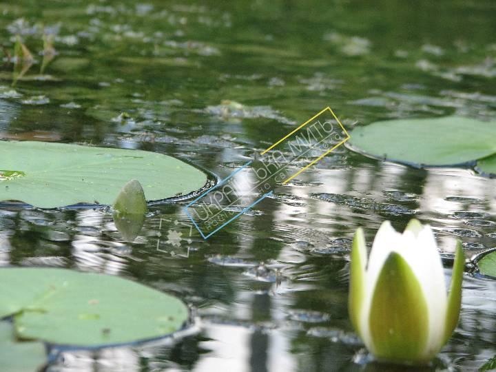 http://uamoment.com/gallery/Lotus-247 photo