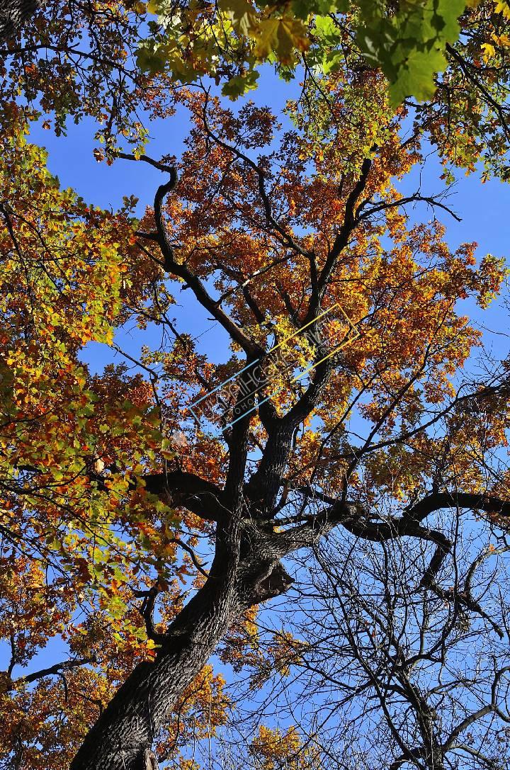 http://uamoment.com/gallery/Autumn-trees-593 photo