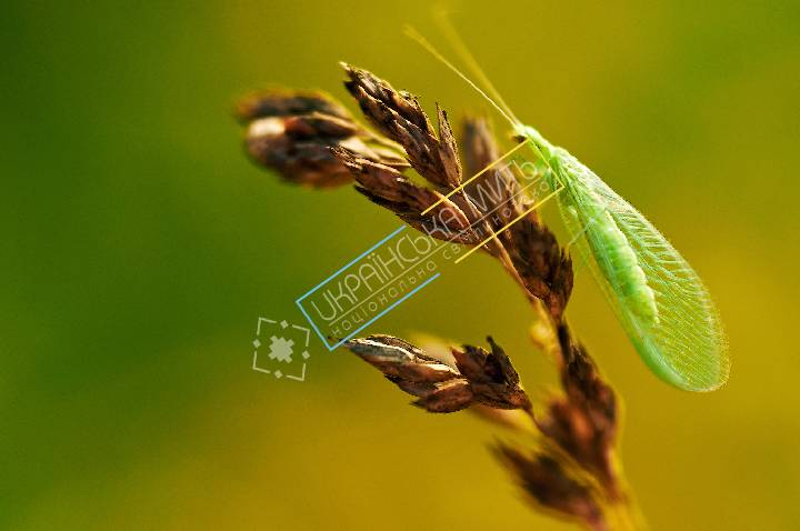 http://uamoment.com/gallery/insect-1026 photo