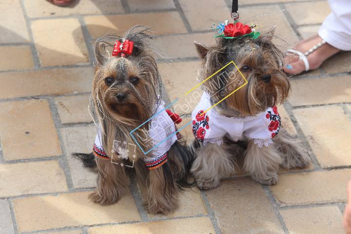uamoment-gallery-Dogs-1109 photo