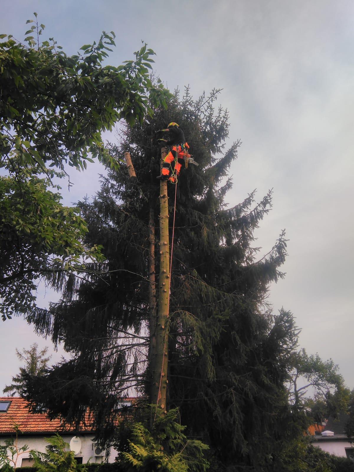 Baumpflege Baumläufer Berlin