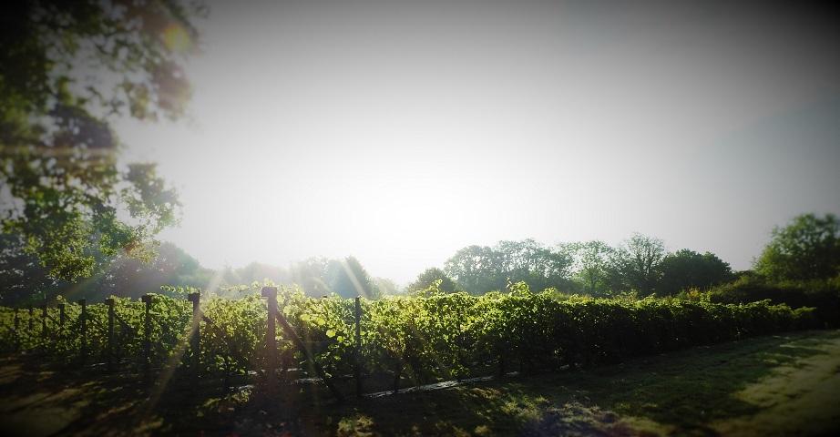 New Hall Vineyards