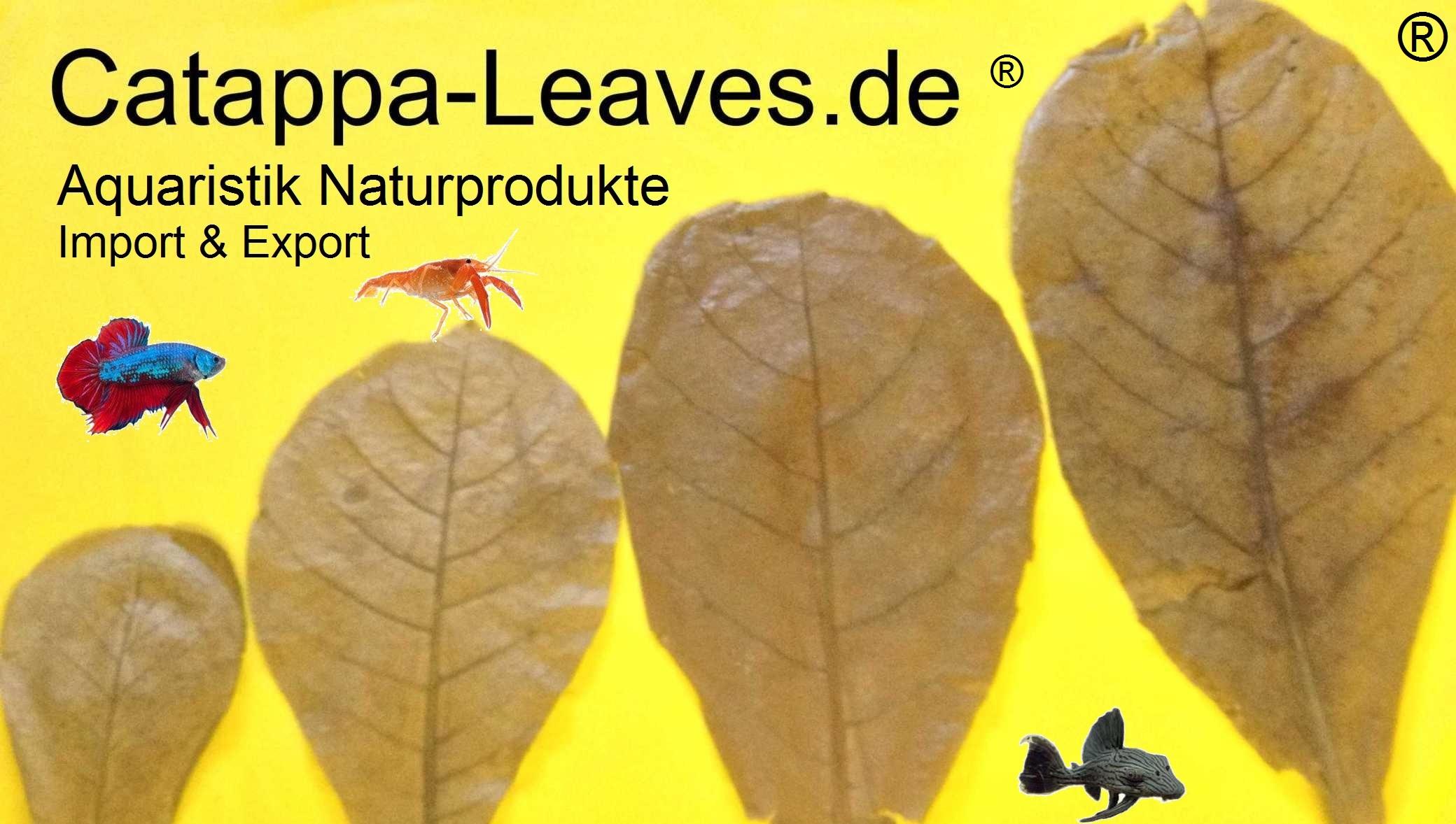 Catappa-Leaves Aquaristik Naturprodukte