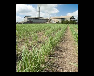 Bundaberg Sugar Ltd