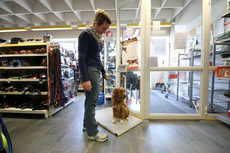Lucky Pets GmbH