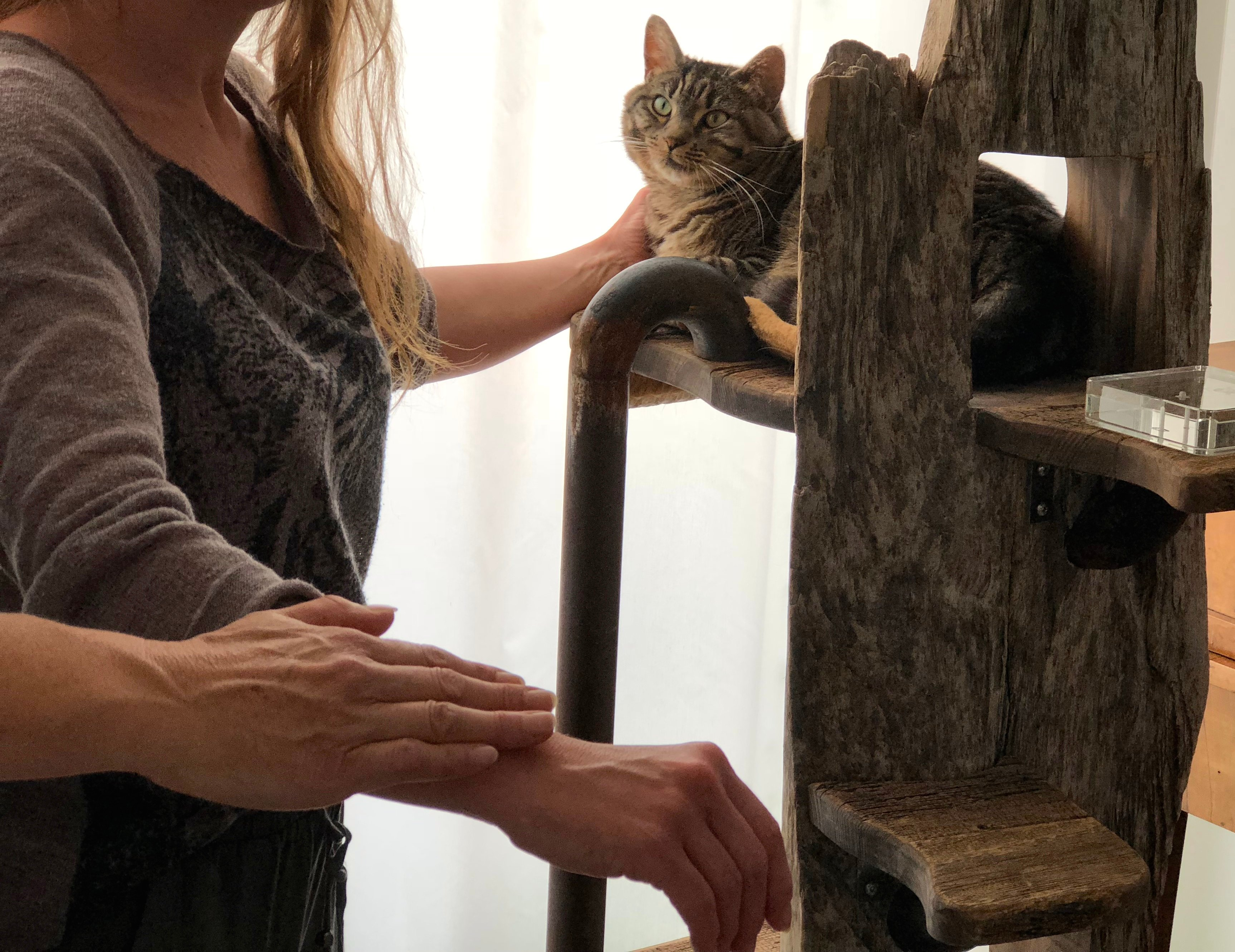 Mobile Tierarztpraxis - Kinesiologie / Verhaltensmedizin