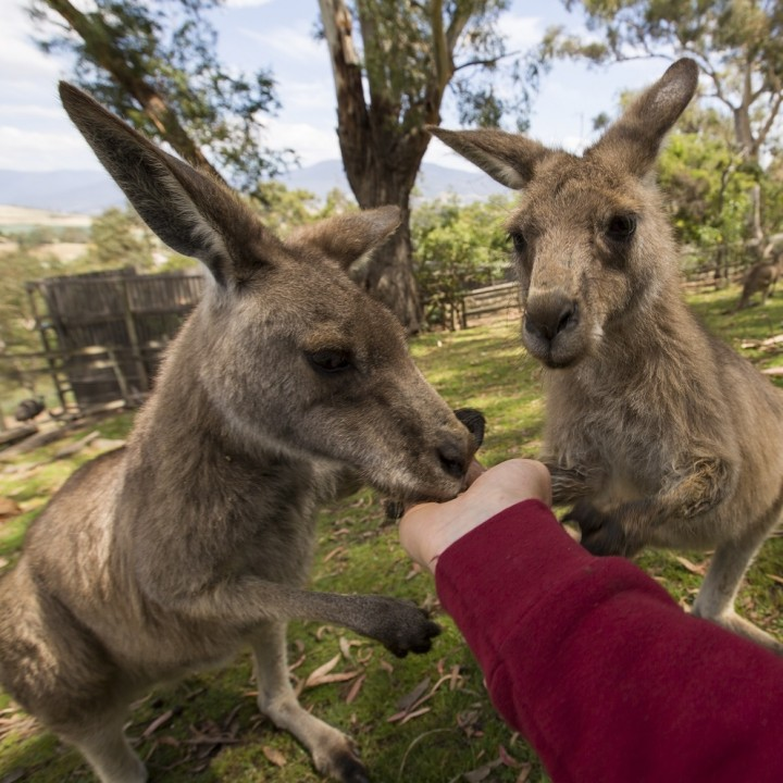 Australia Trip Planner