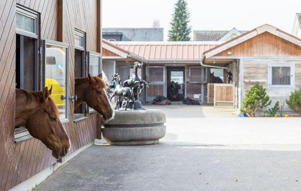 Pferdepension-, und Ausbildungs-, und Handelsstall Josuran AG