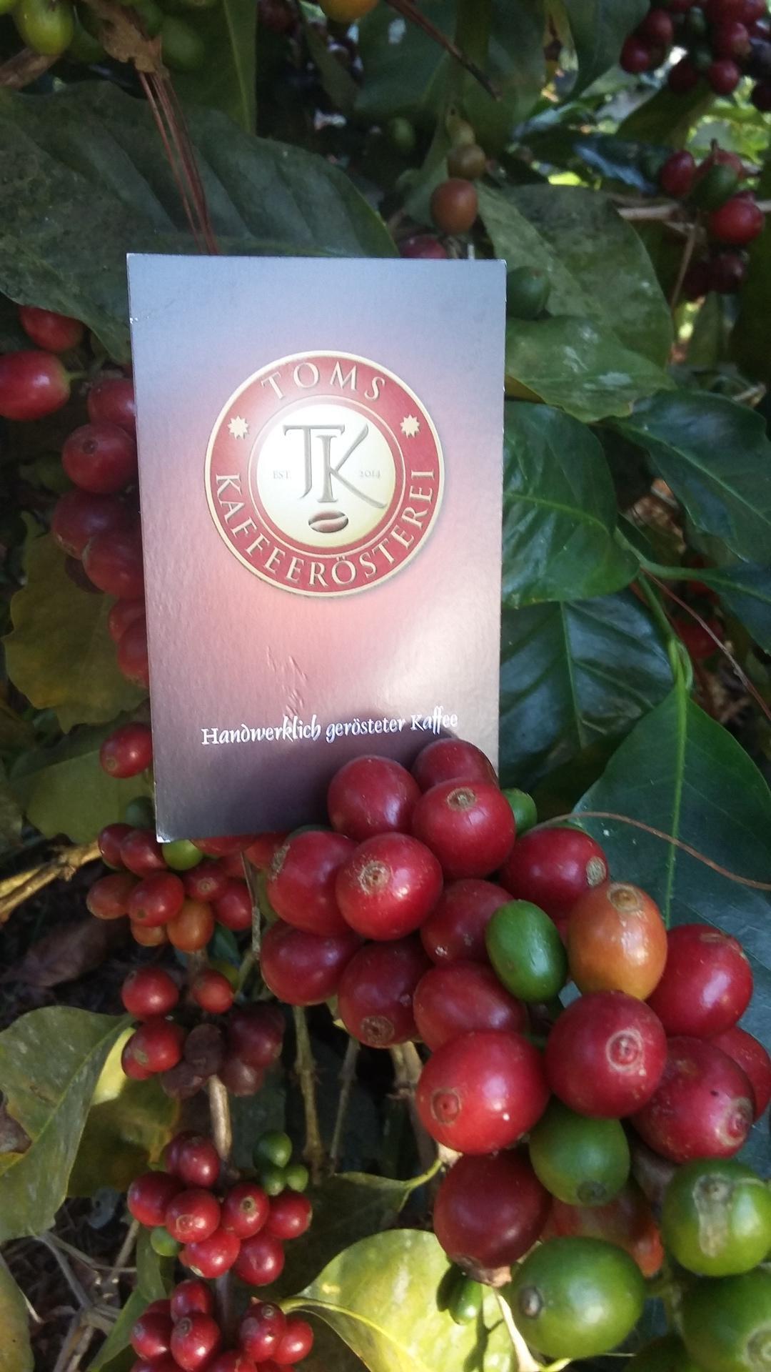 Toms Kaffeerösterei GmbH