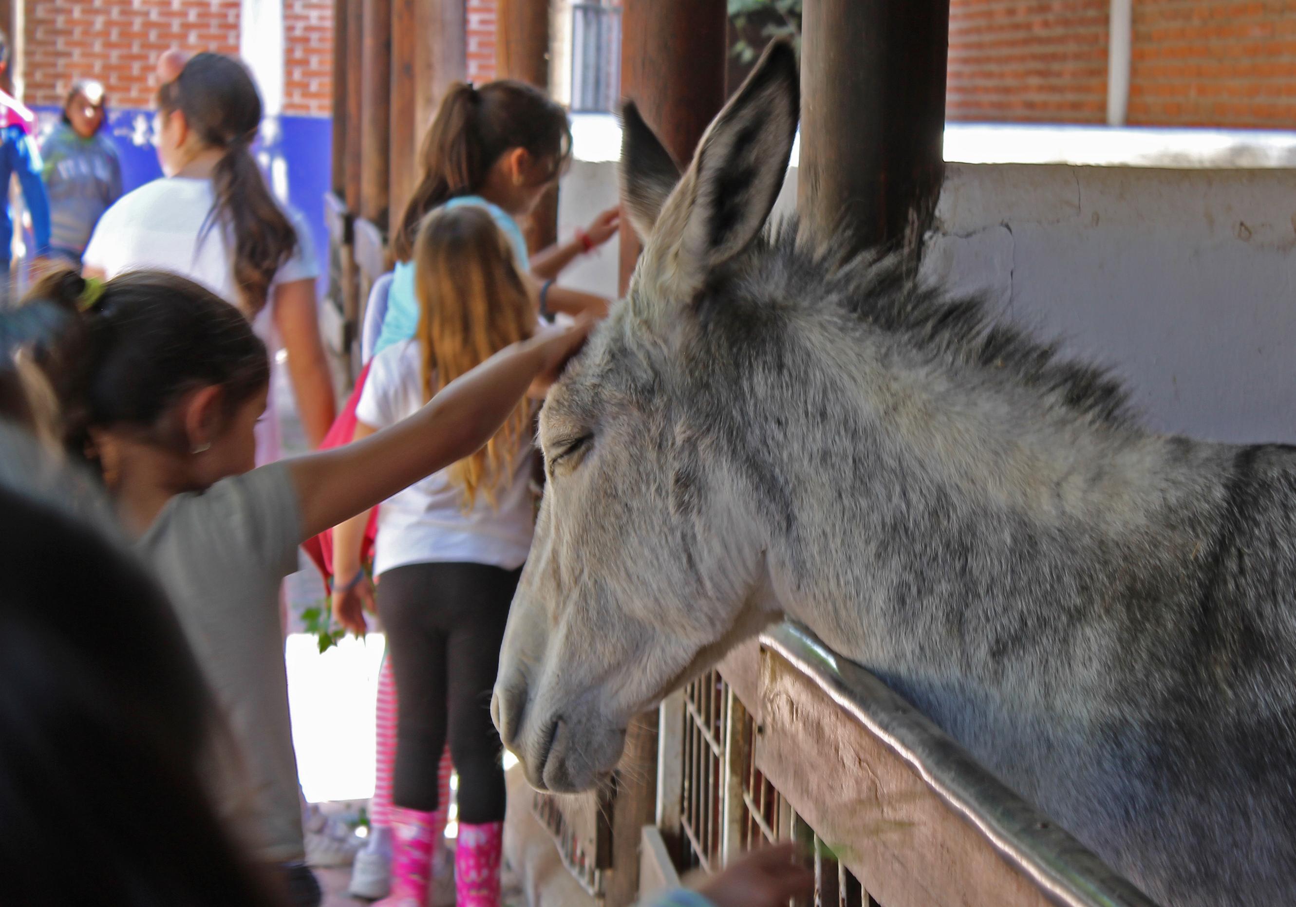 visitante acariciando a un animal en Granja Zavaleta