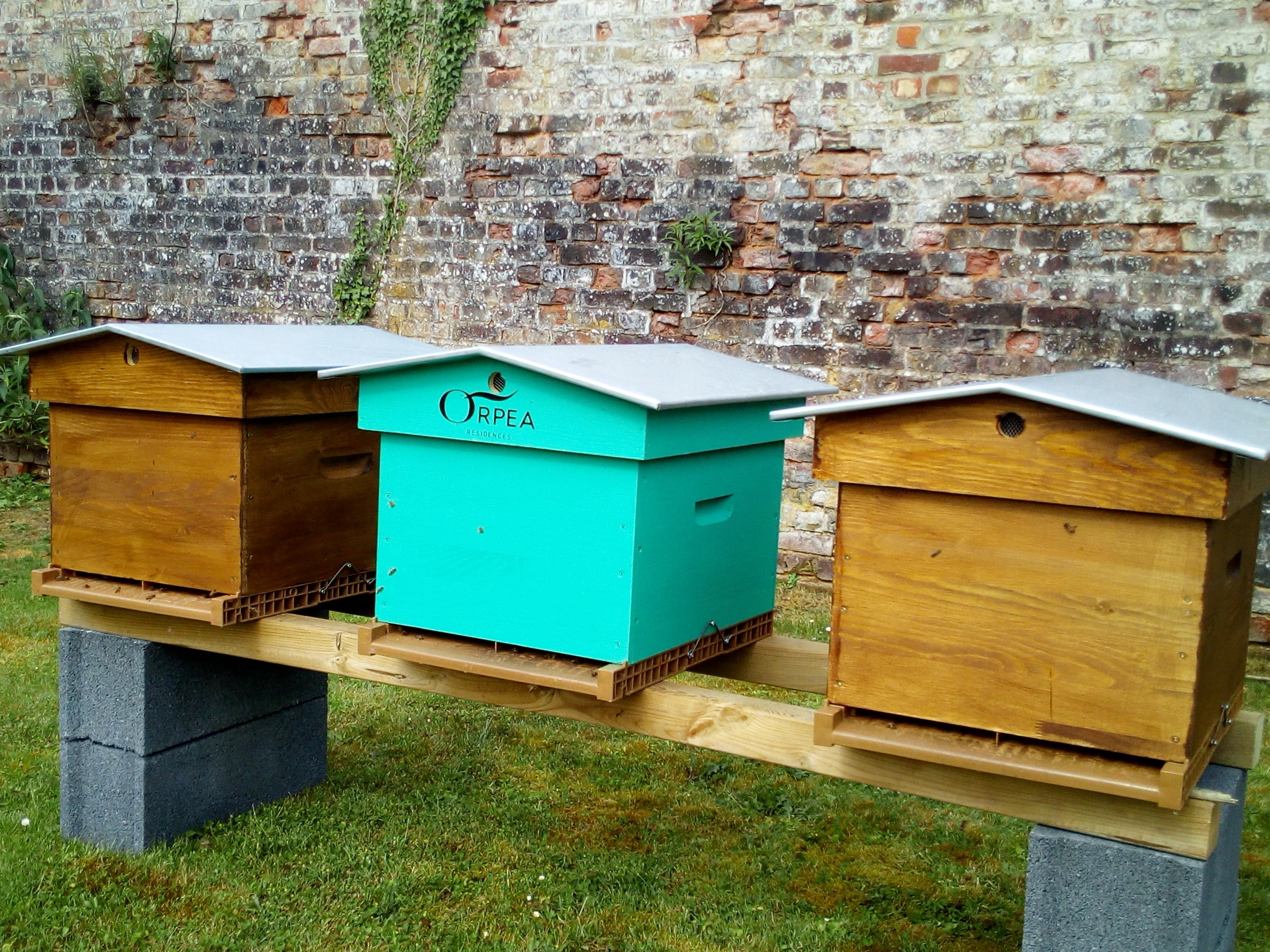 la ruche verte