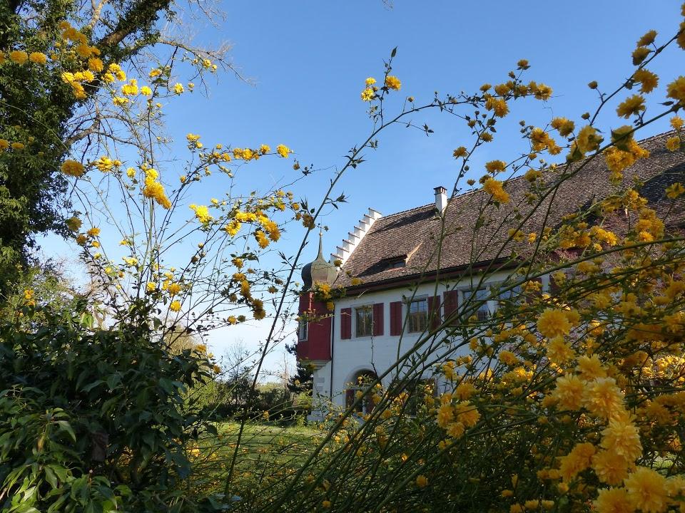 Eisenbibliothek, Stiftung der Georg Fischer AG