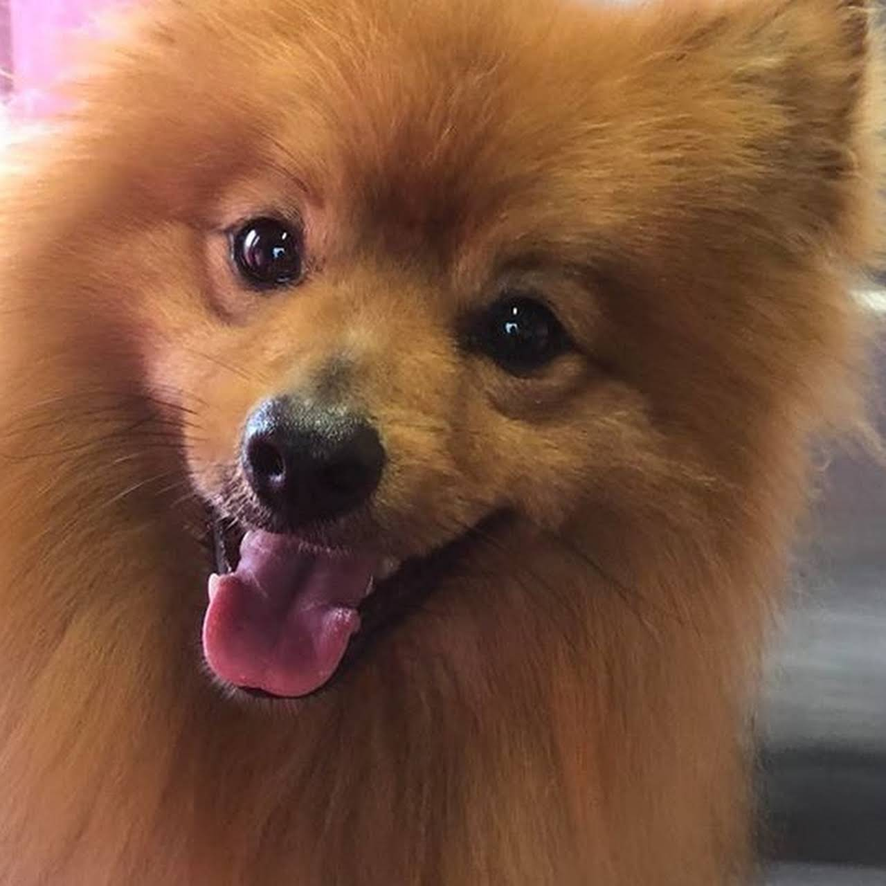 Tammy's Dog Grooming - Redruth, Cornwall TR15 3PT - 07413 517278 | ShowMeLocal.com
