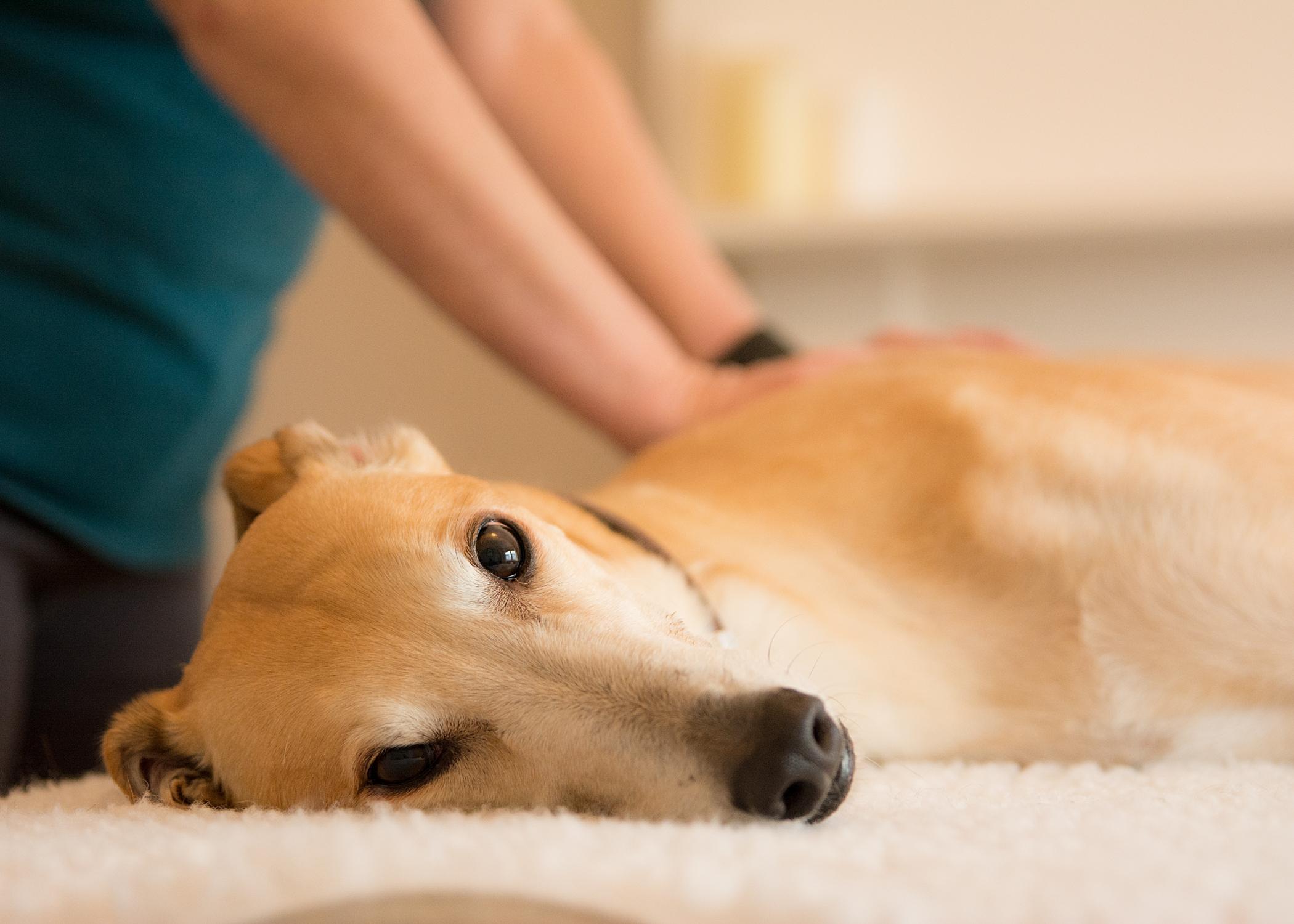Hound Help Canine Massage