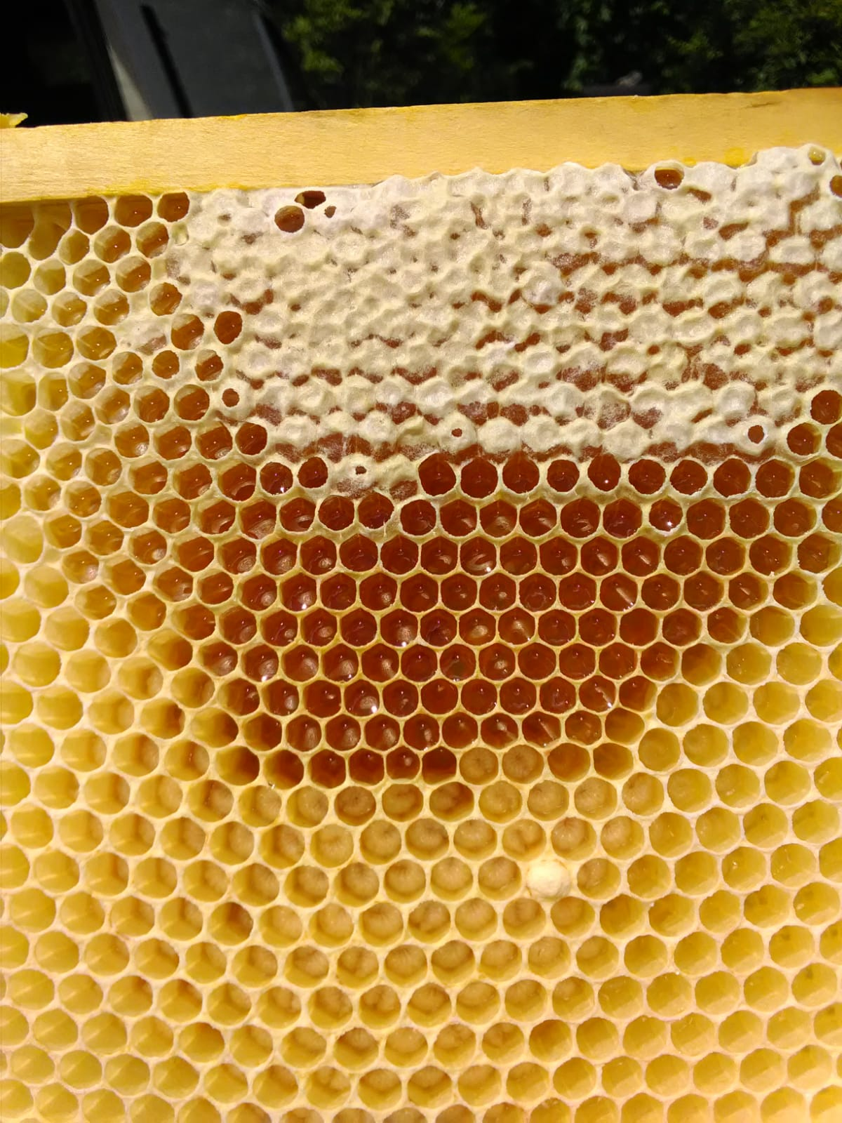 Bio Imkerei Foidl - Honig Bienenhonig Honigprodukte Kitzbühel Kirchberg