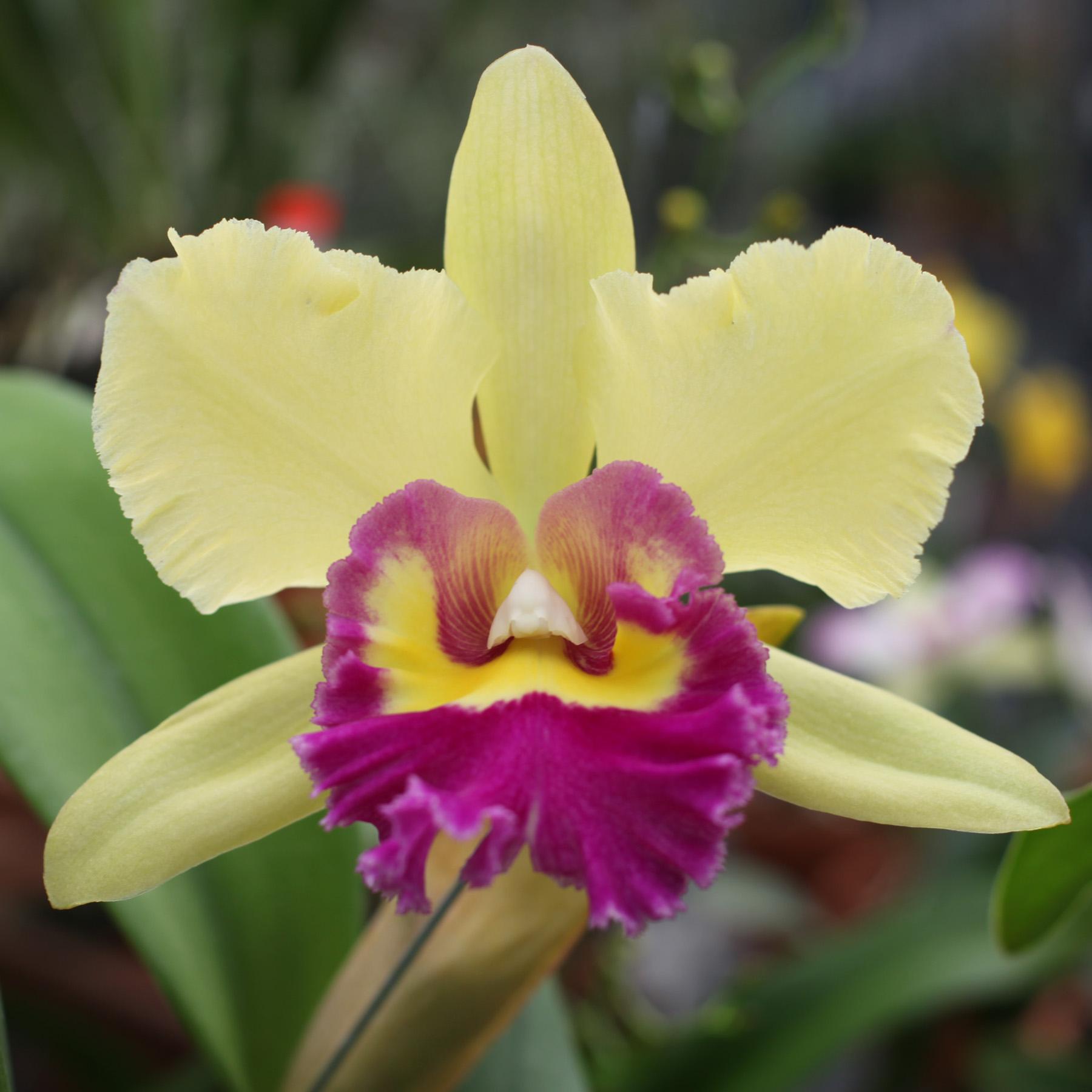 Sundance Orchids & Bromeliads